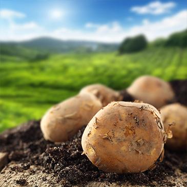 农产品窖藏监测预警管理系统