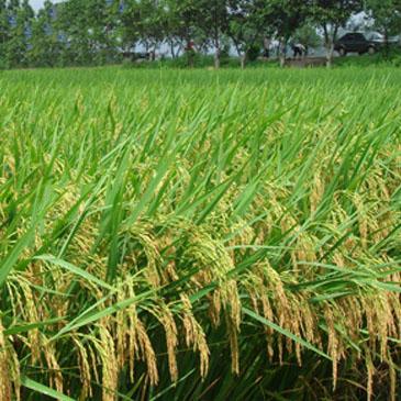 稻田种植智能管理系统