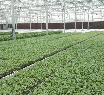 托普云农助力酒泉市农业科学研究院节能日光温室建成