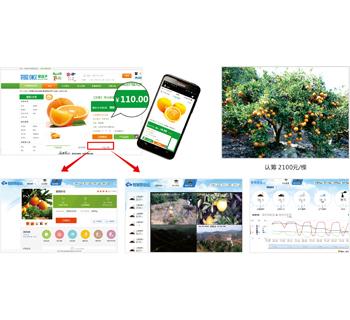 托普云农打造春秋农庄脐橙产业链农业物联网平台