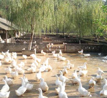 江山养殖场